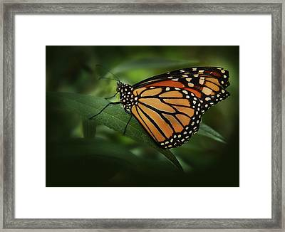 Majestic Monarch Framed Print by Marie Leslie