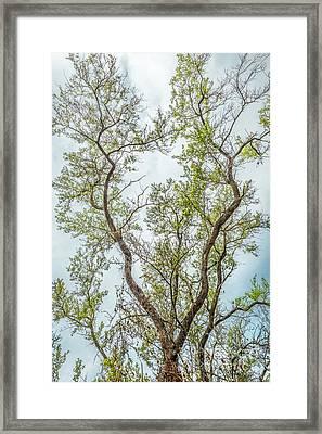 Majestic Mountain Mahogany Framed Print by Alexander Kunz
