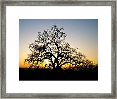 Majestic Oak Tree Sunset Framed Print