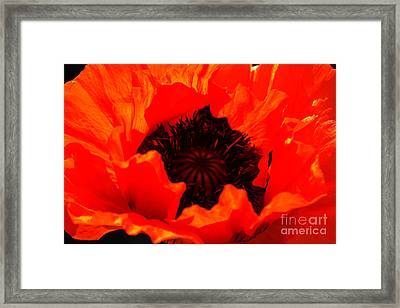 Framed Print featuring the photograph Majestic Poppy by Baggieoldboy