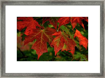 Majestic Red Fall Maple Leaves Art Framed Print