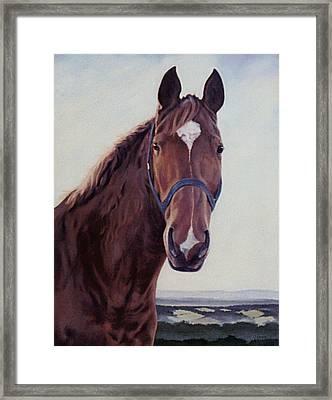 Majestic Roger- Chestnut Horse Framed Print