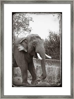 Majestic Framed Print by Sandy Adams