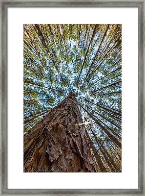 Majestic Spiers Framed Print