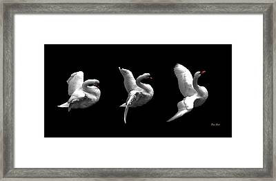 Majestic Swan Triptych Framed Print by Dale   Ford