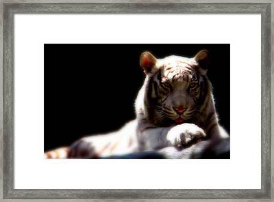 Majestic Tiger Framed Print