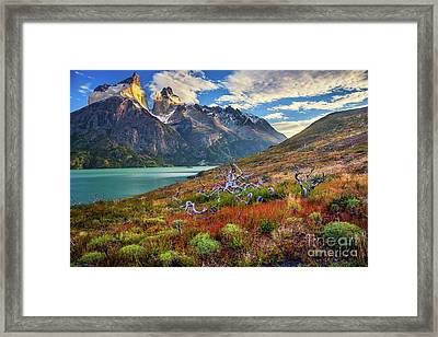 Majestic Torres Del Paine Framed Print by Inge Johnsson