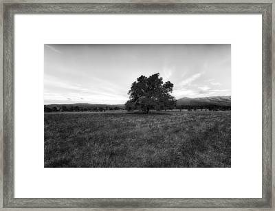 Majestic White Oak Tree In Cades Cove - 4 Framed Print by Frank J Benz