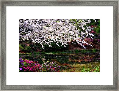 Majesty Garden.... Framed Print