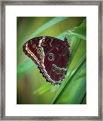 Framed Print featuring the photograph Majesty Of Nature by Karen Wiles