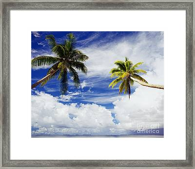 Majuro Atoll, Two Coconut Trees Lean Over Framed Print by Mitch Warner - Printscapes