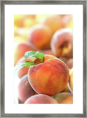 Make A Cobbler Framed Print