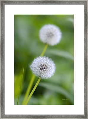 Make A Wish Dandelion Framed Print by Christina Rollo