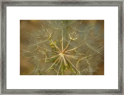 Make A Wish Framed Print by Donna Blackhall