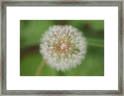 Make A Wish Framed Print by Heather Green