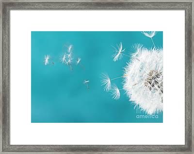 Make A Wish II Framed Print