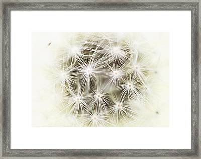 Make A Wish Framed Print by Marlo Horne