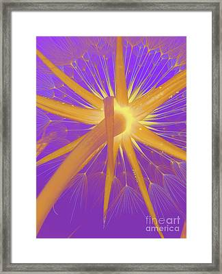 Make A Wish Framed Print by Robert Ball
