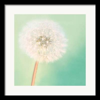 Dandelions Framed Prints