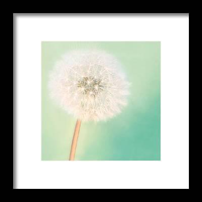 Dandelion Framed Prints