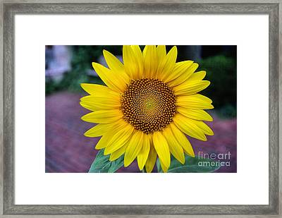 Makes  Me And You Smile Framed Print