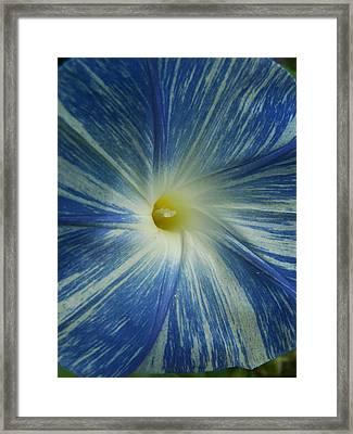 Make Mine Blue Framed Print by Sandy Collier