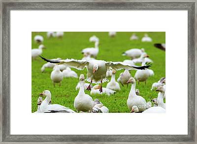 Framed Print featuring the photograph Make Room by Mike Dawson