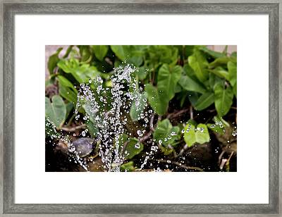 Make Your Splash In Life Framed Print