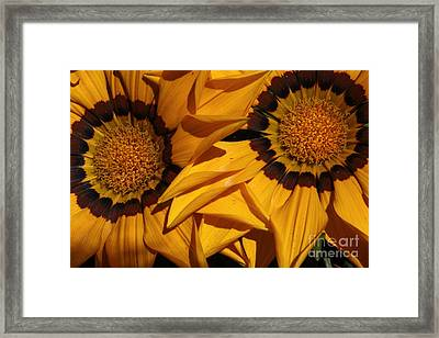 Making A Point Framed Print