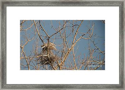 Framed Print featuring the photograph Making Babies by David Bearden