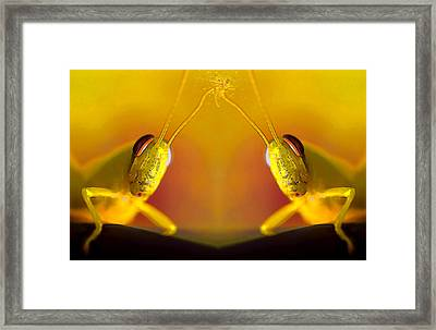 Making Contact Framed Print by Stephen Anderson