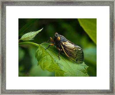 Framed Print featuring the photograph Making Eye Contact by Monte Stevens