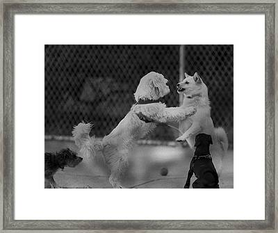 Making Friends Framed Print