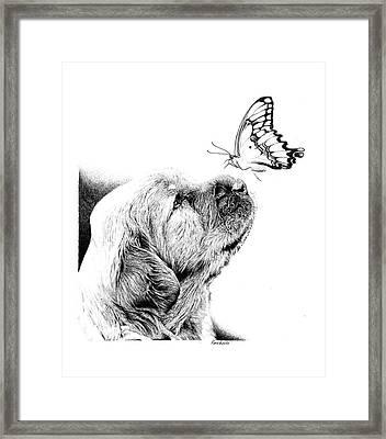 Making Friends Framed Print by Carole Raschella