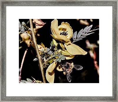 Making Honey Framed Print