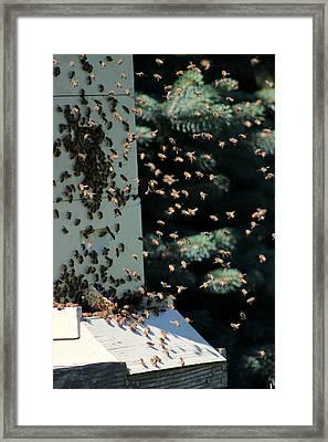 Making Honey - Portrait Framed Print