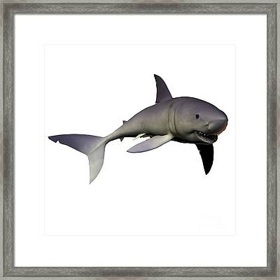Mako Shark Framed Print by Corey Ford