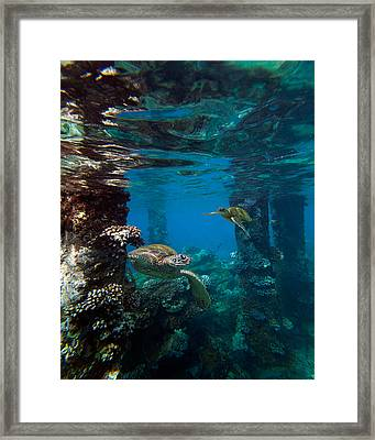 Mala Turtles Framed Print by James Roemmling