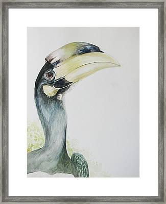 Malabar Pied Hornbill -juvenile Bird Framed Print by Sasitha Weerasinghe
