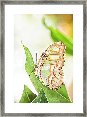 Malachite Greetings Framed Print