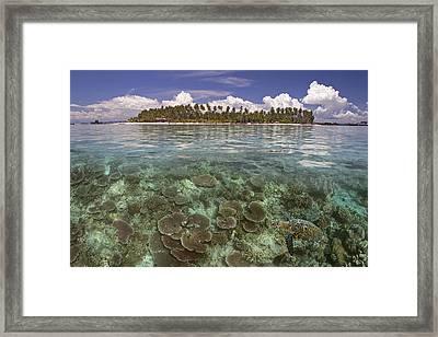 Malaysia, Mabul Island Framed Print by Dave Fleetham - Printscapes