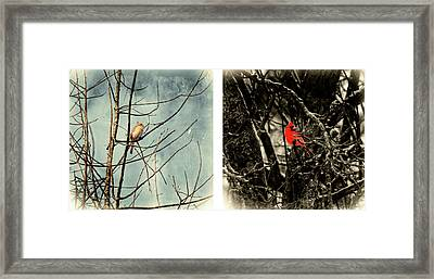 Male And Female Cardinal Framed Print