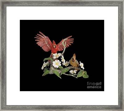 Male And Female Cardinals  Framed Print