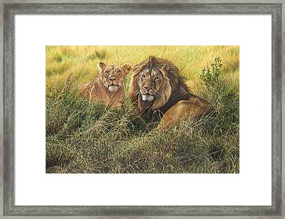 Male And Female Lion Framed Print