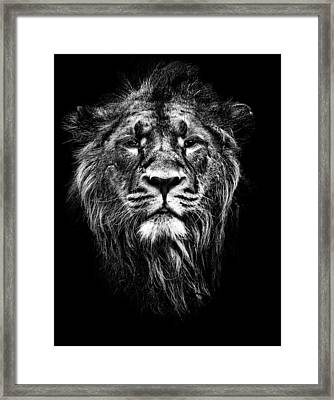 Male Asiatic Lion Framed Print by Meirion Matthias