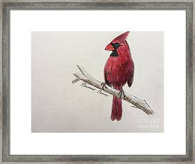 Male Cardinal In Winter Framed Print