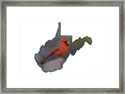 Male Cardinal Perched On Rail Framed Print