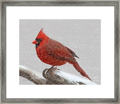 Male Cardinal In Snow Framed Print