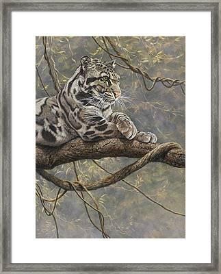 Male Clouded Leopard Framed Print