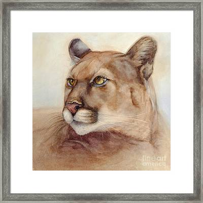 Male Cougar Framed Print